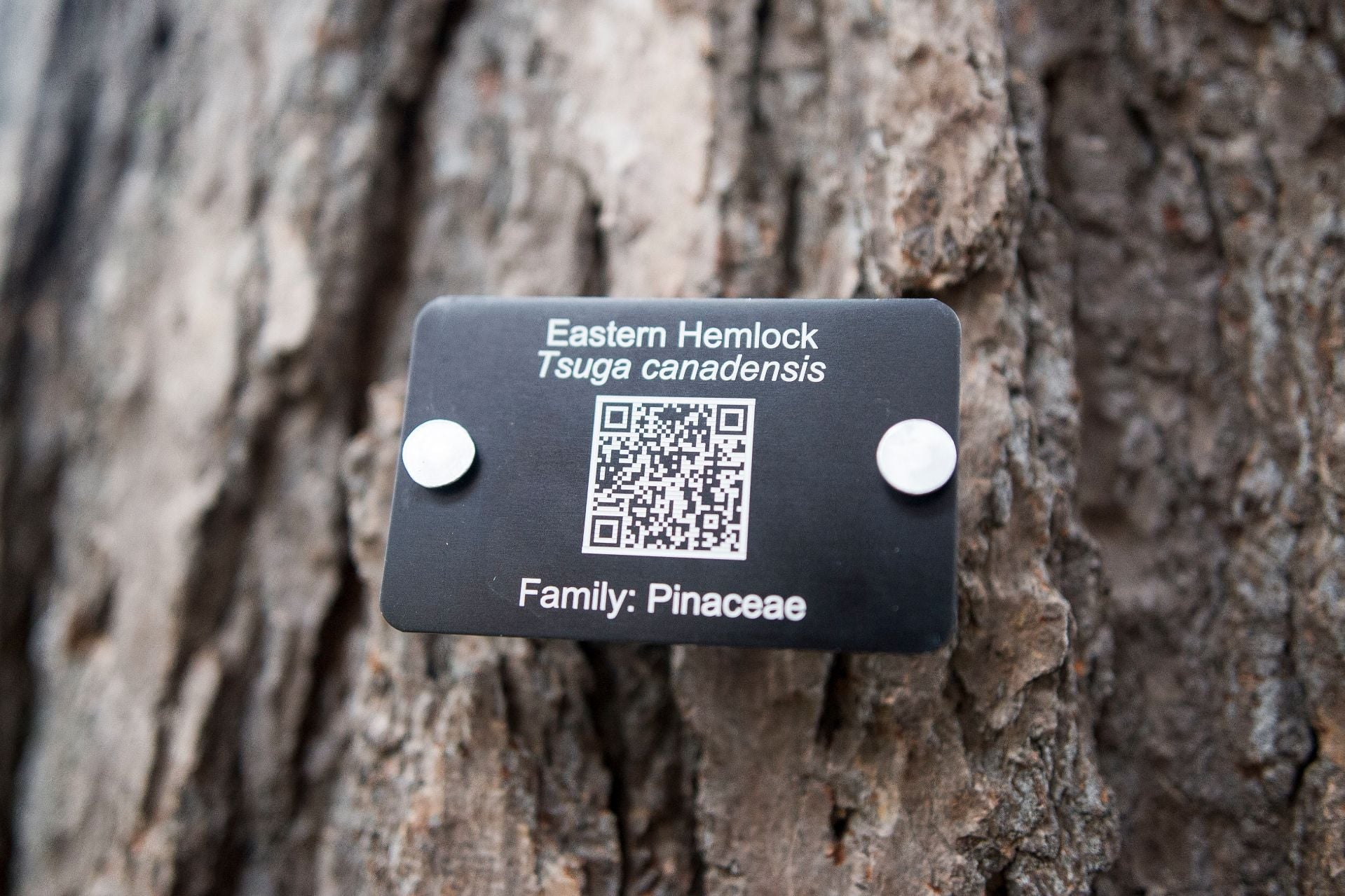 QR Codes for Wood Identification