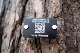 Wood Identification Systems