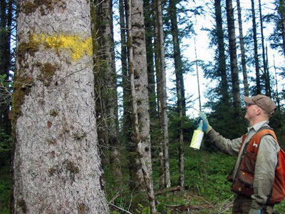 Chemical Paint Marking for wood identification