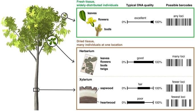 DNA Fingerprinting for wood identification