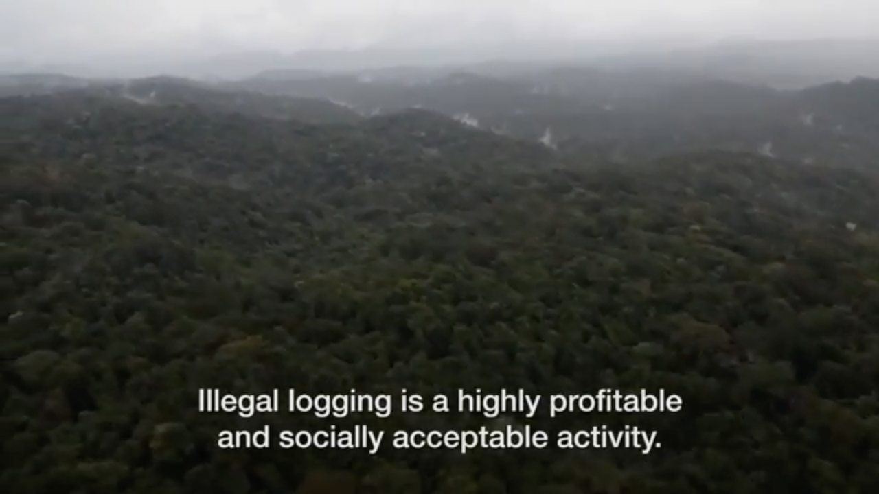 Illegal Wood logging in Peru